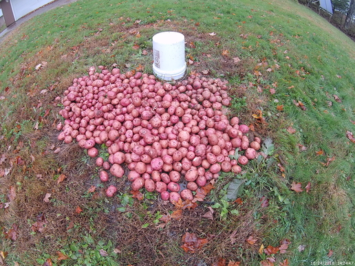 How To Grow, Harvest And Store Potatoes To Feed A Family